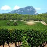 wijnveld languedoc-roussillon